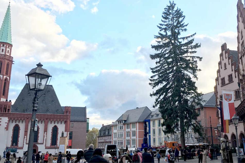 Der Weihnachtsbaum auf dem Römerberg ist ohne Frage groß, aber ist er auch ansehnlich?