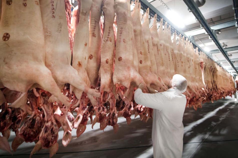 Frisch geschlachtete Schweine hängen in einem Kühlhaus des Fleischunternehmens Tönnies.