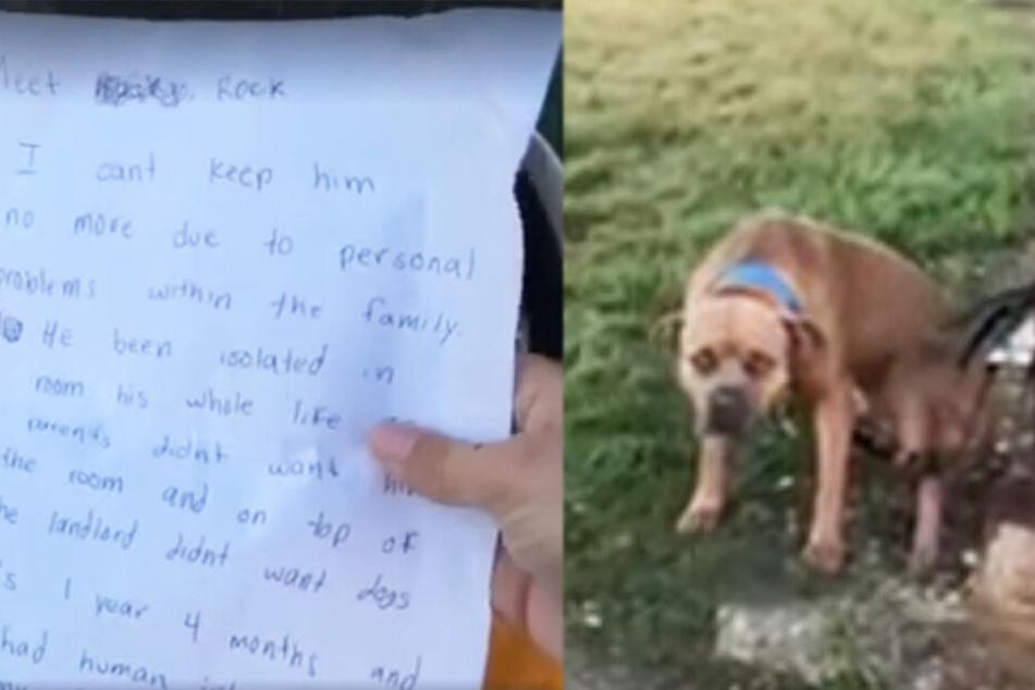 Tierretter finden ausgesetzten Hund mit Zettel: Die Nachricht darauf bricht ihnen das Herz