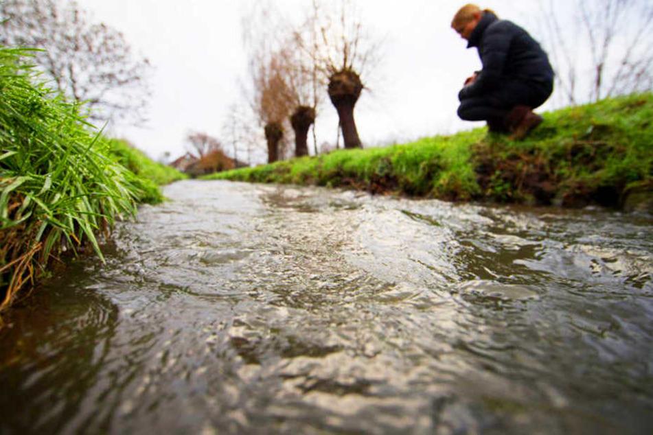 """Durch Silohaufen und Güllelager werden Gewässer mit dem sogenannten """"Abwasserpilz"""" verseucht."""