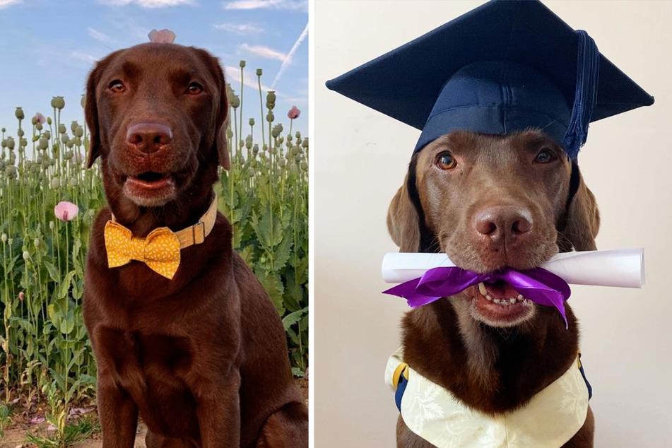 Hund soll sich nicht ausgeschlossen fühlen und bekommt sein eigenes Abschlussbild