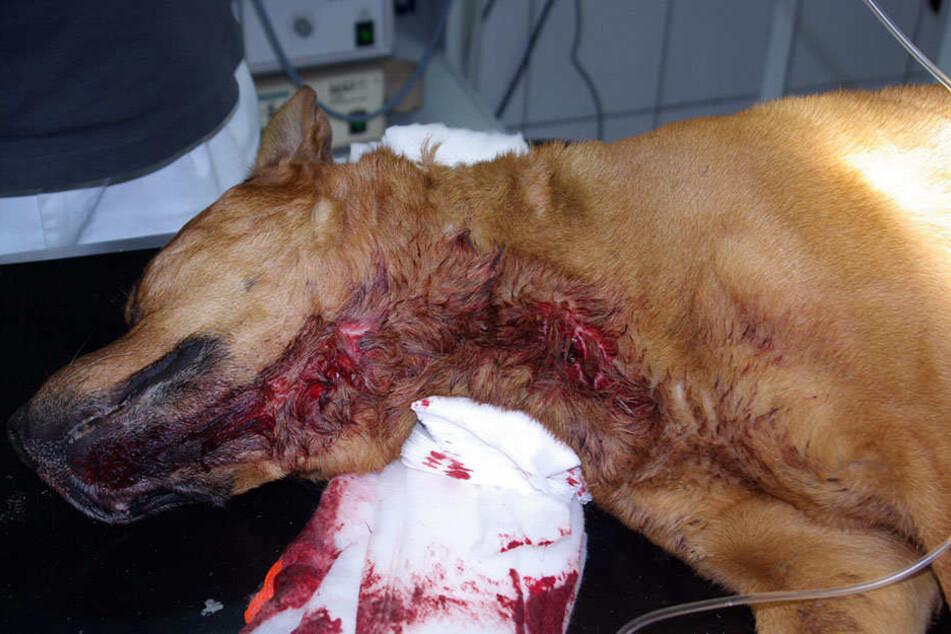 So übel zugerichtet wurde der Hund im Stadtteil Kappel gefunden.