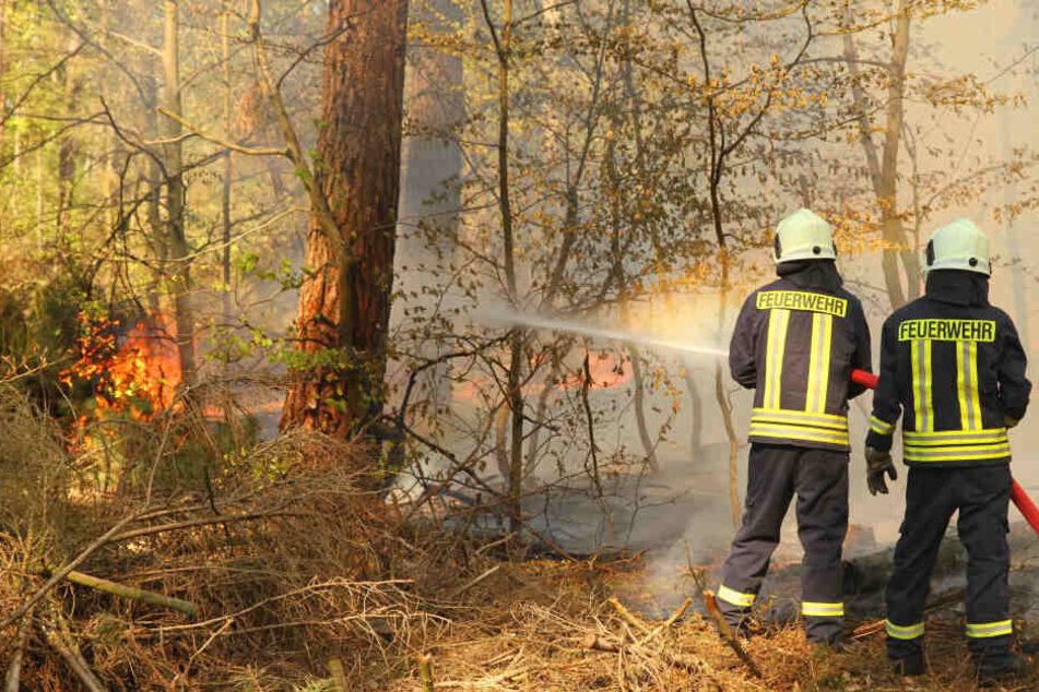 Auch die Waldbrandgefahr war extrem hoch. Das ging schon früh im Jahr los.