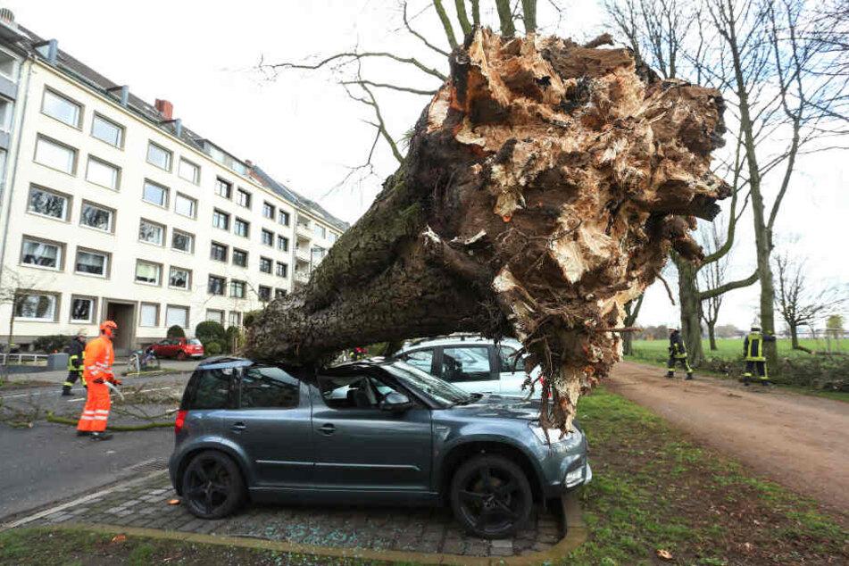 Ein umgestürzter Baum in Düsseldorf.