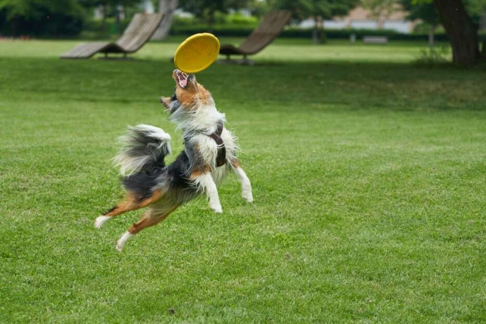Am Geruch erkennt man giftiges Hundespielzeug aus Plastik.
