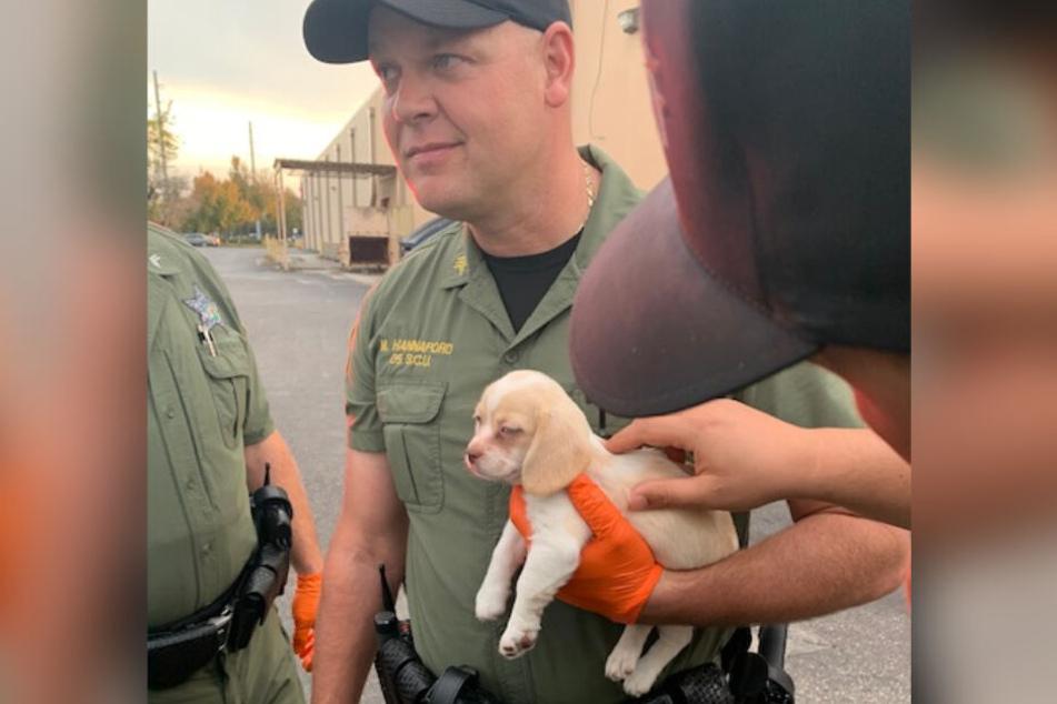 Der kleine Hundewelpe auf den armen eines Beamten des Hillsborough County Sheriff's Office.