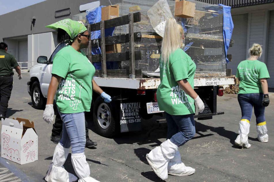 Mitarbeiter eines Tierheim-Organisation bergen tote sowie verwahrloste, lebende Tiere aus einer Lagerhalle.