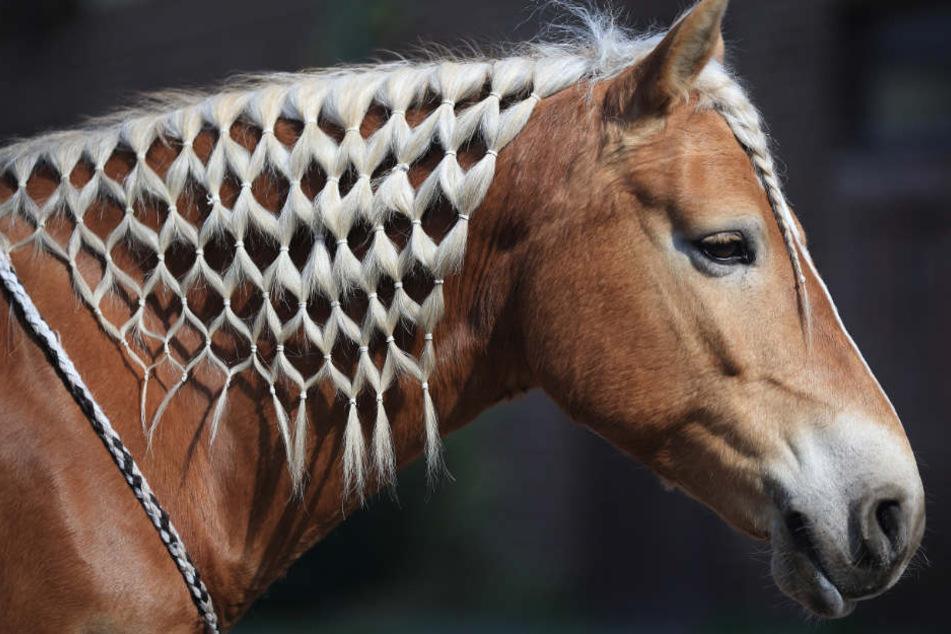 Laut Polizei gibt es Anhaltspunkte, dass der Täter regelmäßig mit Pferden zu tun hat. (Symbolbild)