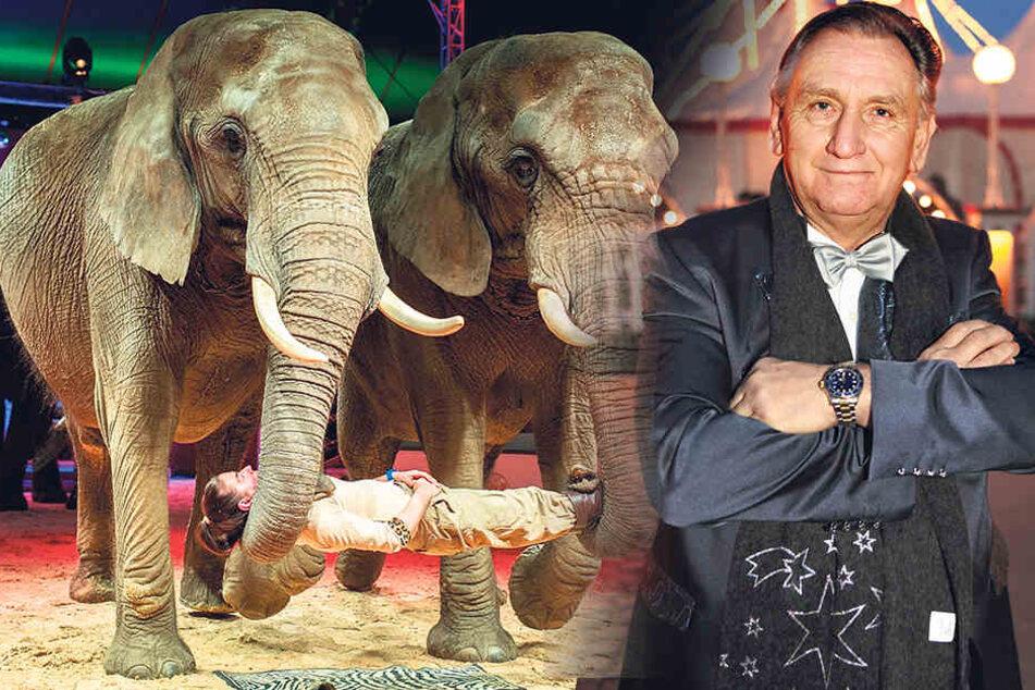 Weihnachtscircus-Direktor Mario Müller-Milano (68) würde gegen das  Elefantenverbot klagen.