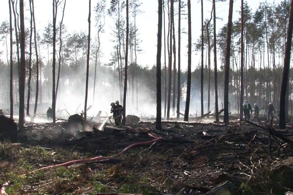 Ein etwa drei Hektar großes Waldstück stand in Flammen.