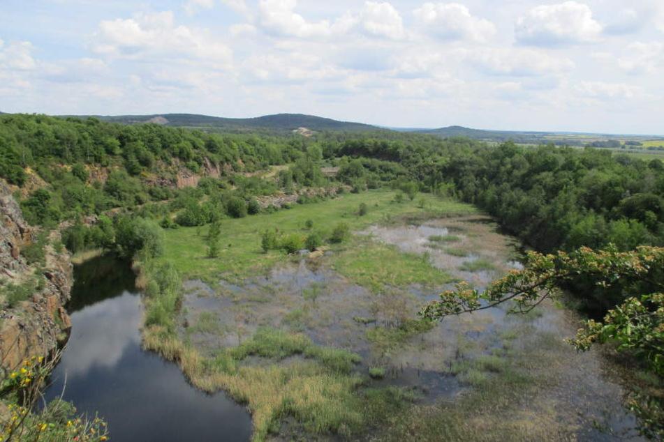 Durch das Vorhaben ist auch die etwa drei Hektar große Flachwasserfläche am Fuße der Felswand bedroht. Felswand und Flachwasserzone sind laut der Bürgerinitiative Böhlitz Lebensraum für zahlreiche Tiere.