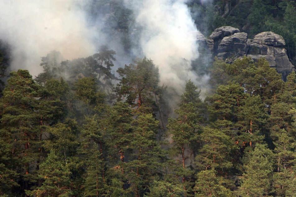Feuerwehreinsatz in Sächsischer Schweiz: Nationalpark-Besucher verursacht Brand