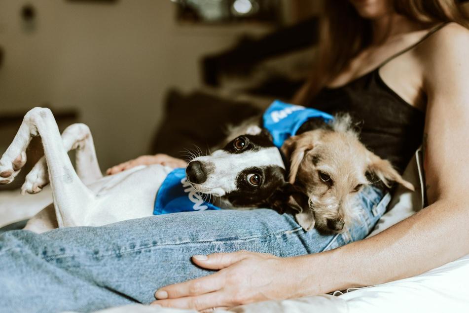 Vielen Hundebesitzern geht das Herz auf, wenn ihre Lieblinge mit ihnen kuscheln. Bis dahin ist es jedoch ein langer Weg.