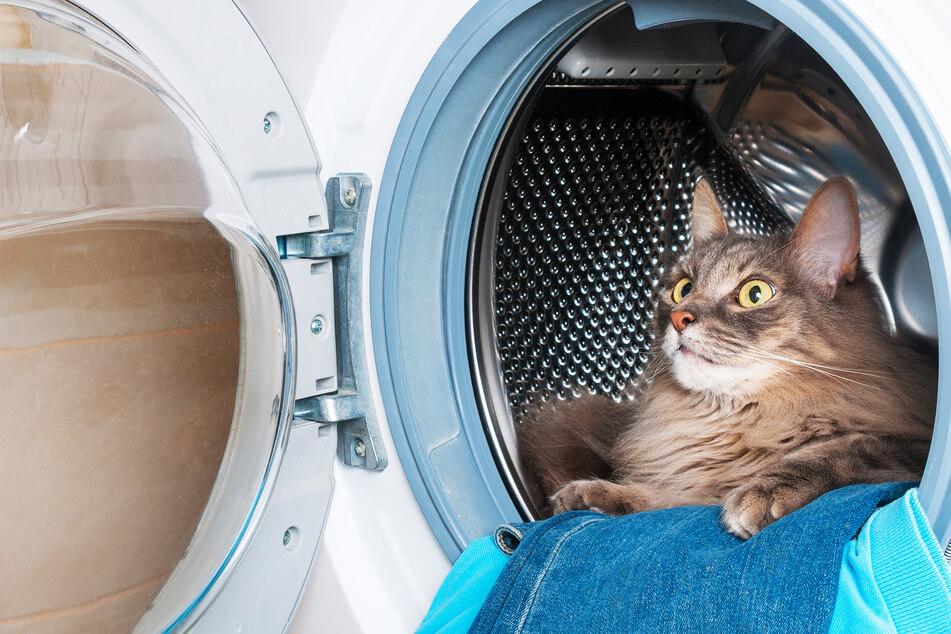 Katze schläft in Waschmaschine, die plötzlich eingeschaltet wird