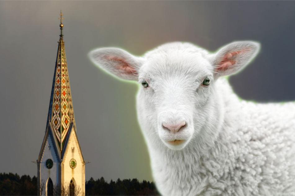Drei Schafe genießen jetzt im Ortenaukreis Schutz von ganz oben. (Symbolbild)