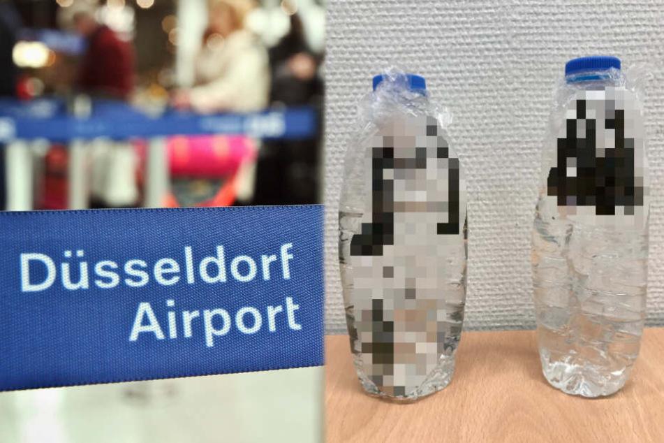 Grusel-Fund: Flugpassagier mit glitschigen Blutsaugern gestoppt