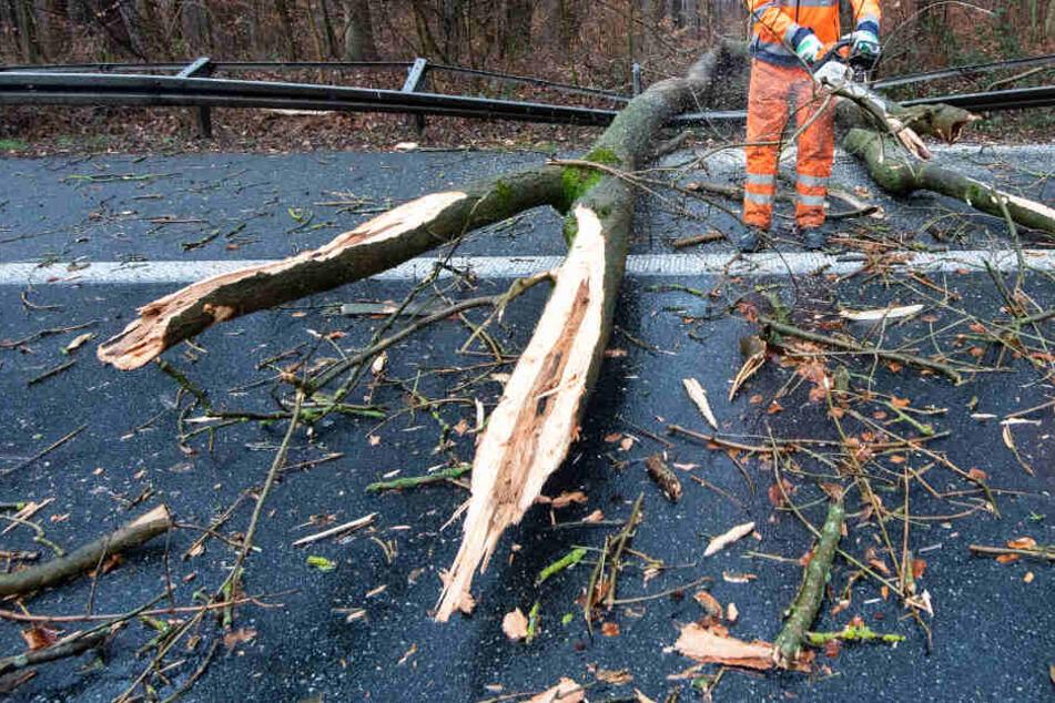 Mehrere Bäume sind aufgrund des heftigen Windes umgestürzt.