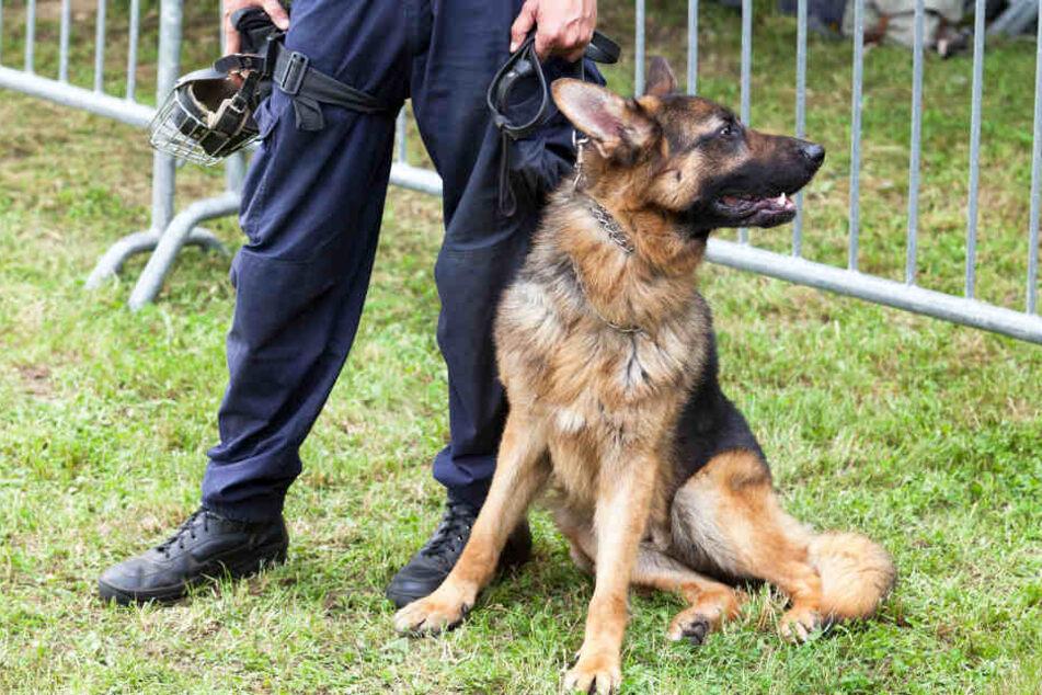 Der Polizeihund konnte die Maske und den Messer des Täters aufspüren. (Symbolbild)