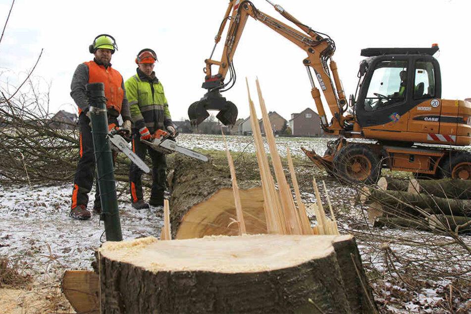 20 Bäume sind auf dem Spielplatz am Siekweg gefällt worden.