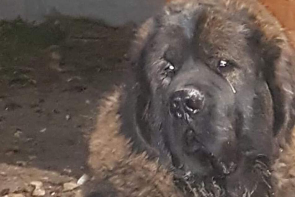 Schwer kranker Hund wird in Wildnis aus Auto geschmissen