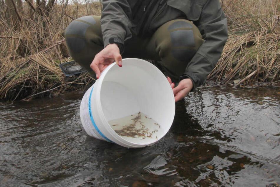 Ein Hobby-Angler setzt den Nachwuchs aus.