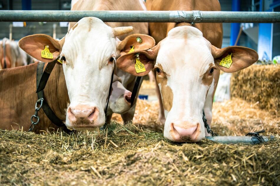 Wöchentlich werden in Deutschland über ein Kilo Fleisch pro Person verzehrt.