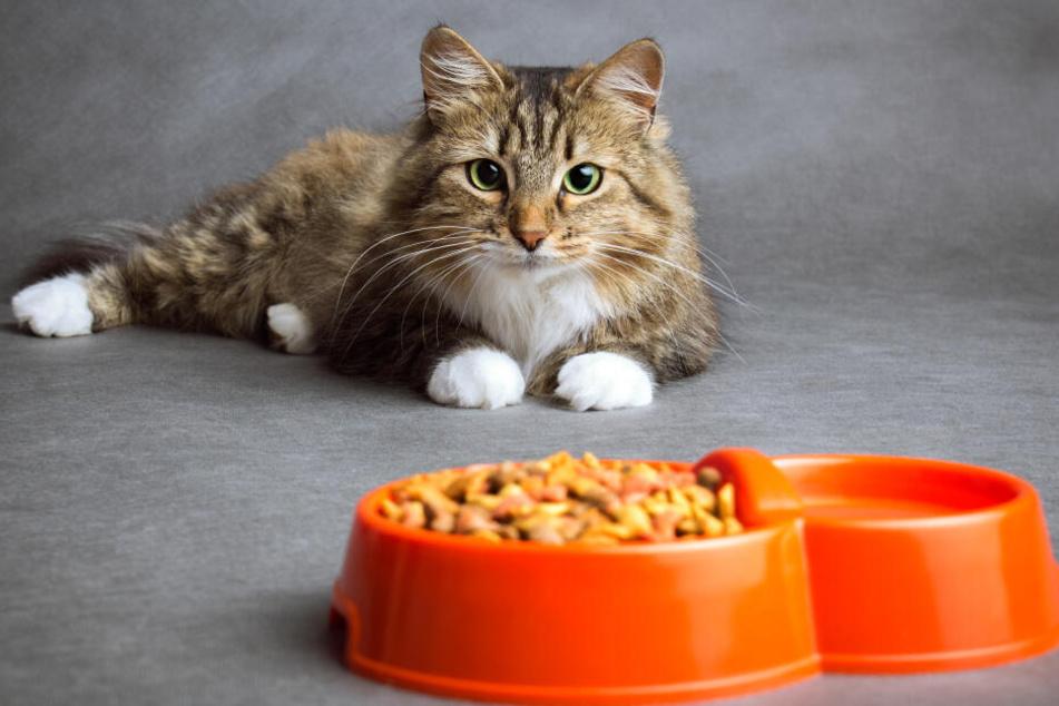 Skandale um Katzenfutter: Darauf sollte man beim Füttern achten!