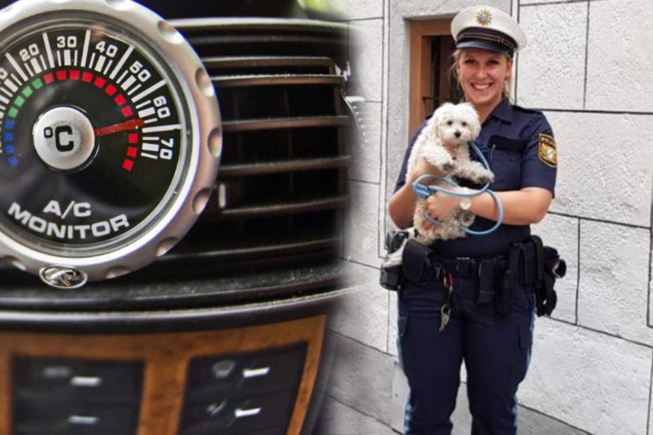 Echte Helden! Polizei rettet Hund aus heißem Auto, Besitzer ist wenig einsichtig