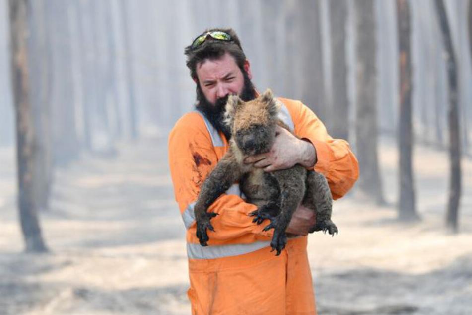 Wildtierretter Simon Adamczyk trägt einen Koala aus einem brennenden Wald in der Nähe von Cape Borda auf Kangaroo Island, südwestlich von Adelaide.