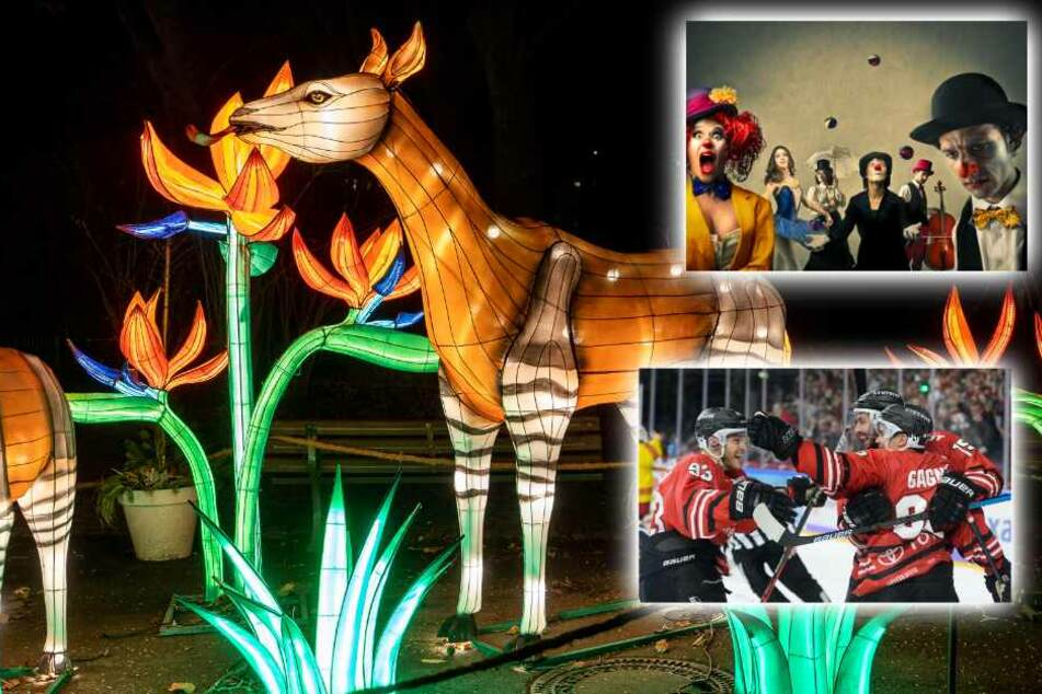 Circus, China Lights und Haie: Das ist heute in Köln los