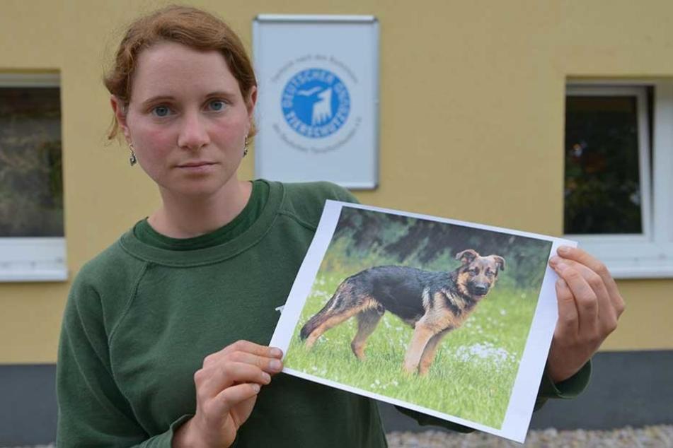 Tierschützerin Antje Schmidt (29) zeigt ein Foto des verstorbenen Edgar. Der Schäferhund-Rüde musste eingeschläfert werden.