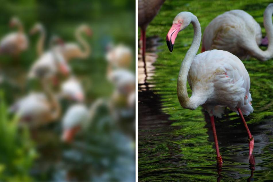 """""""Wir waren alle baff"""": Dieser Flamingo stellt durch Zufall Altersrekord auf"""