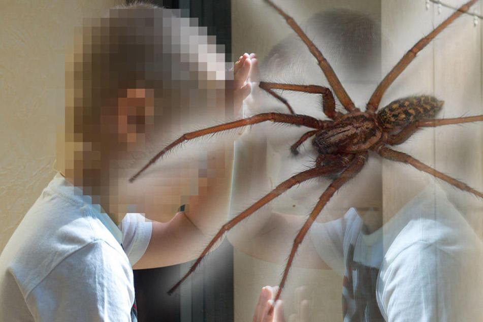 Dem Achtjährigen wurde eine Spinne in den Mund gelegt. (Symbolbild)