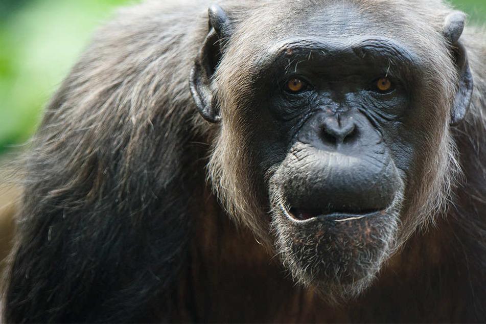 Im Gegensatz zum Menschen spielt der soziale Vergleich für die intelligenten Tiere aber keine Rolle.