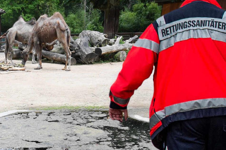 Das Unglück geschah bei dem Wassergraben, der das Kamelgehege umgibt.
