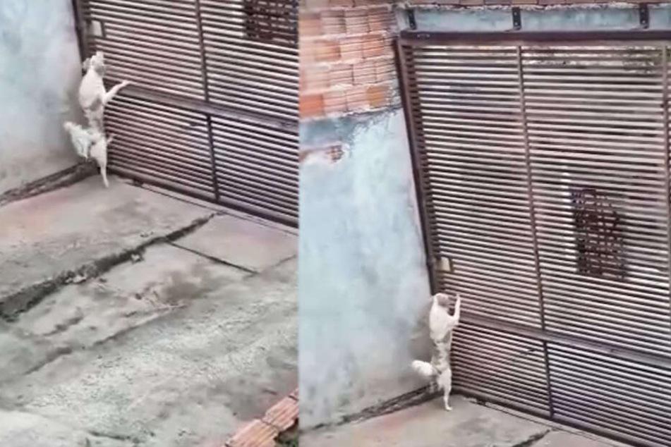 Frauchen ist sprachlos, wie ihr Hund durch dieses riesige Tor entkommt