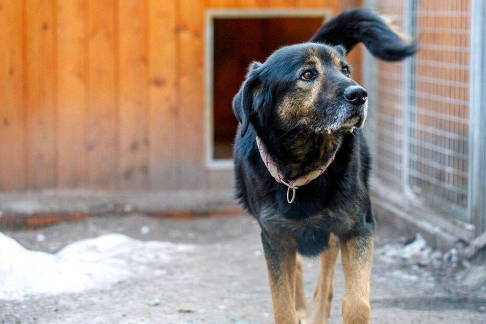 Zweite Chance für Problemhund: Tierheim will Spenden sammeln