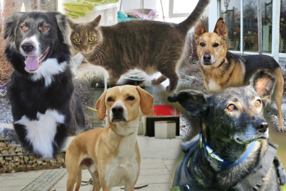 Wau und Miau: Diese Hunde und Katzen solltest Du Dir anschauen, wenn Du Tiere magst!