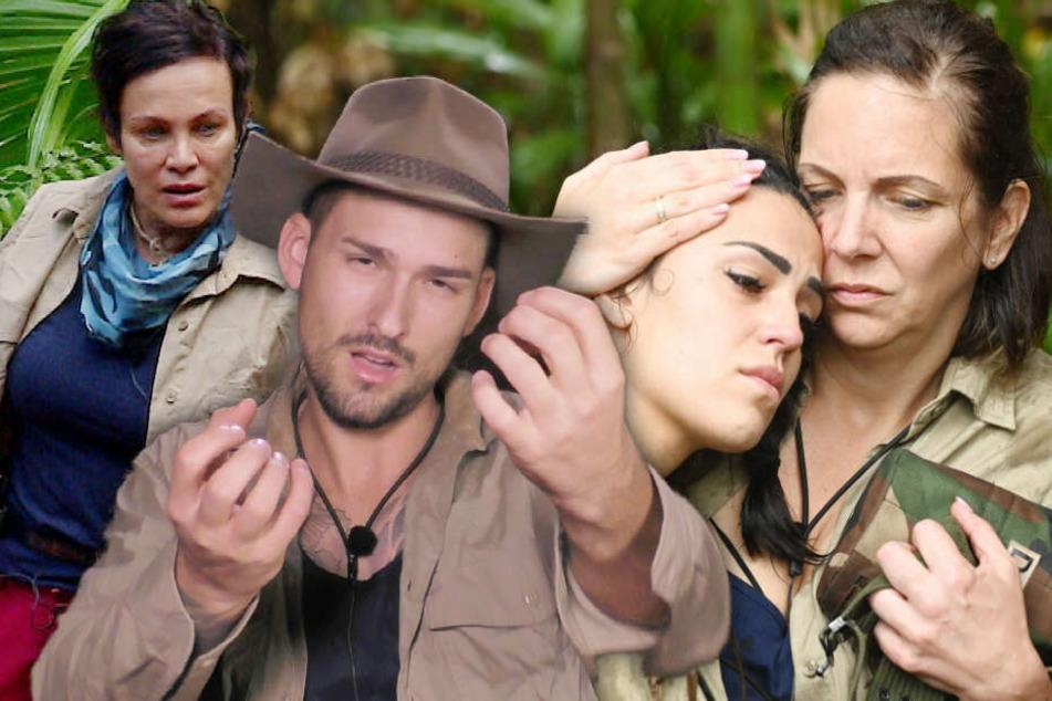 Dschungelcamp Tag 6: Die Danni-Büchner-Show kennt keine Sendepause