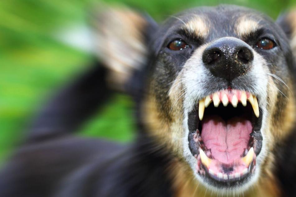 Horror-Hund beißt Studenten (25) ins Gesicht: Polizei ermittelt Verdächtigen