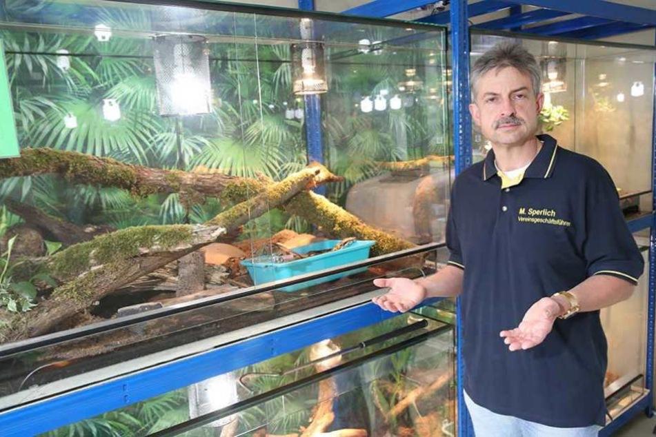 Michael Sperlich vor einem Terrarium: Besonders die Abgabe von Reptilien hat sich in letzter Zeit deutlich vermehrt.