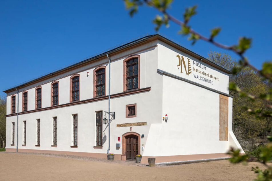 Das Waldenburger Naturalienkabinett plant eine besonders lebendige Osterüberraschung.