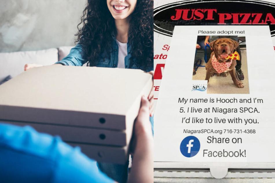 Diese Pizzakartons sollen Hunden ein schöneres Leben verschaffen