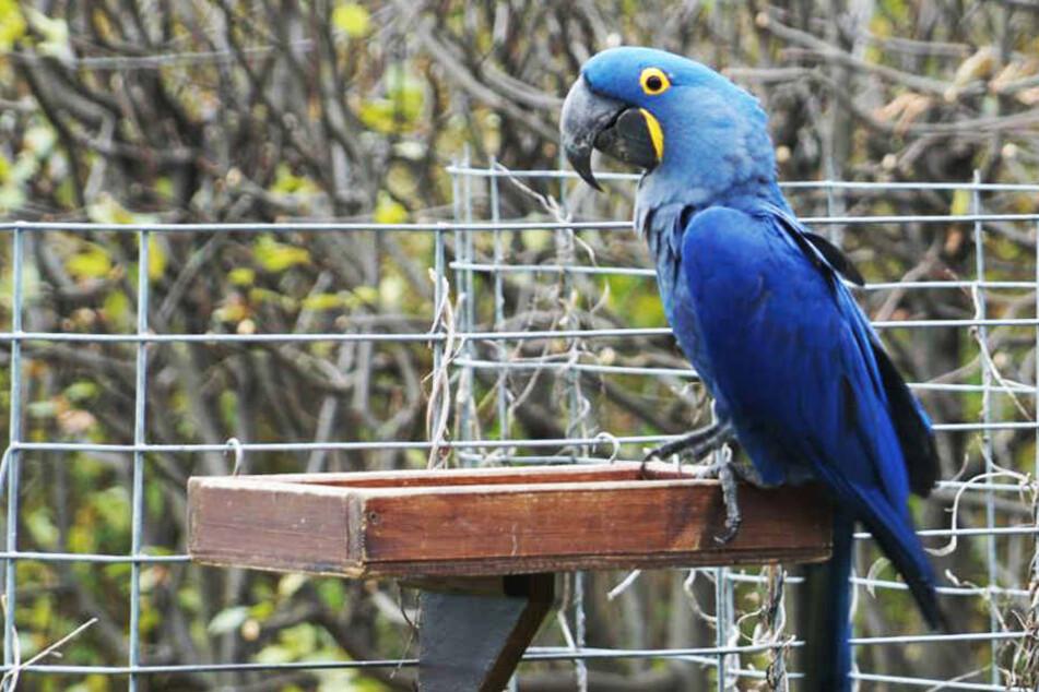 Schicksal des blauen Ara aus dem Dresdner Zoo ist geklärt