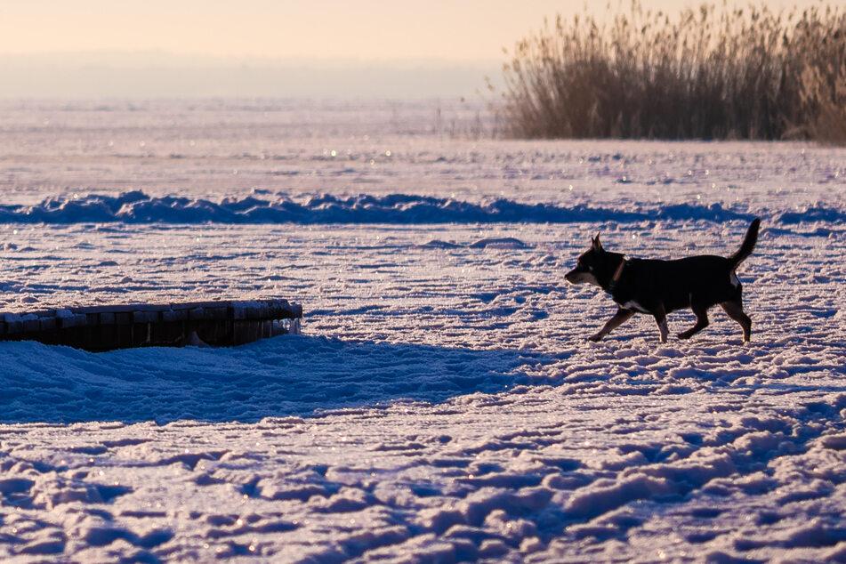 Mann will seinen Hund vom Eis holen, bricht ein und stirbt!