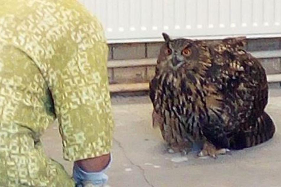 Der Uhu wurde in einen Tierpark gebracht.