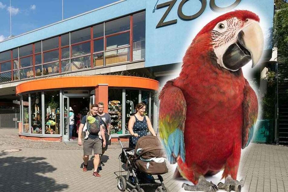 Ein hellroter Ara ist ebenfalls aus dem Dresdner Zoo geflüchtet. (Symbolbild)