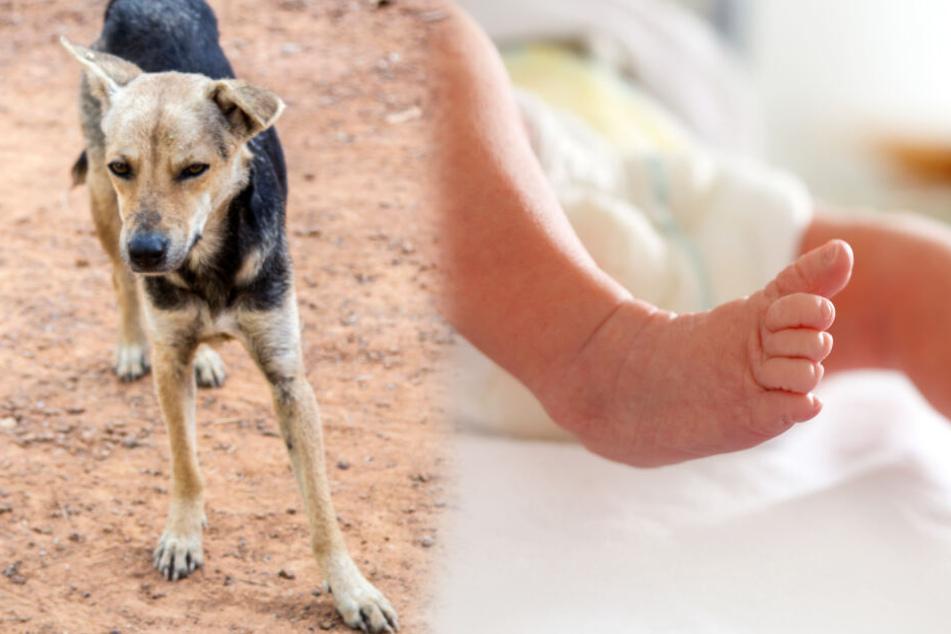 Säugling von Mutter (19) ausgesetzt und von Hunden gefressen