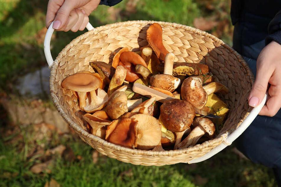 Auch typische Herbstsorten landen jetzt schon im Korb.