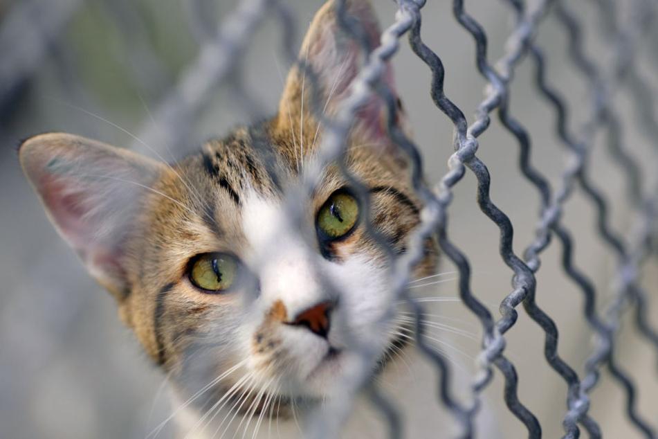 Zahlreiche Katzen und Hunde mussten in die Obhut der Tierämter übergeben werden (Symbolbild).